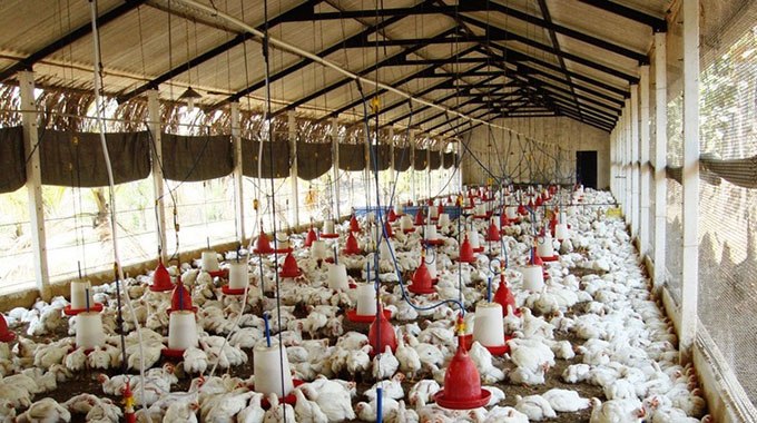 Poultry feeds production up 10% in Q1