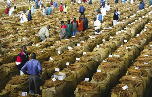 Tobacco selling season set to delay