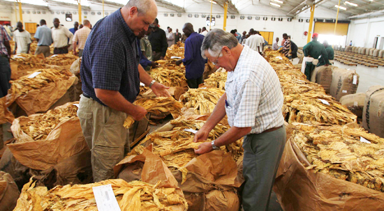 Tobacco sales to begin next month