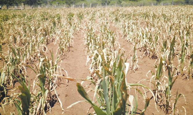 Wet spell brings relief to agric sector