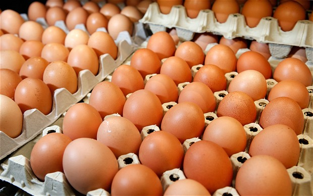 Eggs, day-old chicks shortages hit Zimbabwe